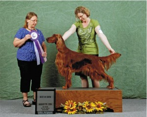 Conformation_Caireen_UKCBestInShow_2.5years